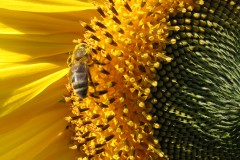Melissa Bees' Columbia Gorge Beginning Beekeeping Classes- at Grow Organic- Hood River April 10th & 17th, 2012
