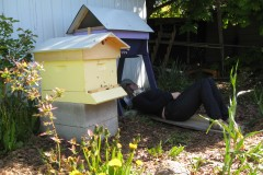 Beginning Beekeeping- The First Year of Keeping- Columbia River Gorge, Wed May 9th 2012