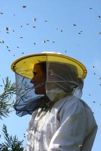 Melissa Elliott of Melissa Bees capturing a swarm.