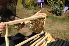 Top- Bar Langstroth Hive
