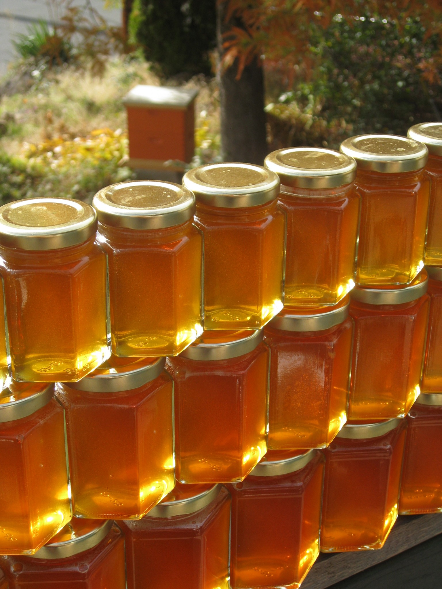 Honey Harvest 2012 Class- Sat. Oct. 13th @ Grow Organic Store- Hood River