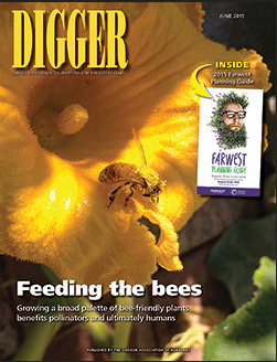Feeding the Bees Digger Magazine Melissa Bees